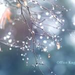 秋の雨、秋田の自然を楽しむ暮らし