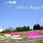 大森町・芝桜フェスタ2015レポート
